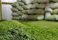 Argentina compró 31 millones de kilos de yerba en el exterior