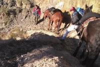 Desbarataron a una banda que robaban animales vacunos en Sarmiento
