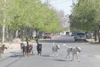 """Proteccionistas exigen más lugares para castrar animales: """"Las calles están desbordada"""""""