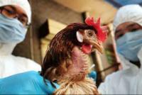 China detecta el primer contagio de gripe aviar H10N3 en humanos