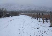 Este sábado Pedernal amaneció cubierto de nieve